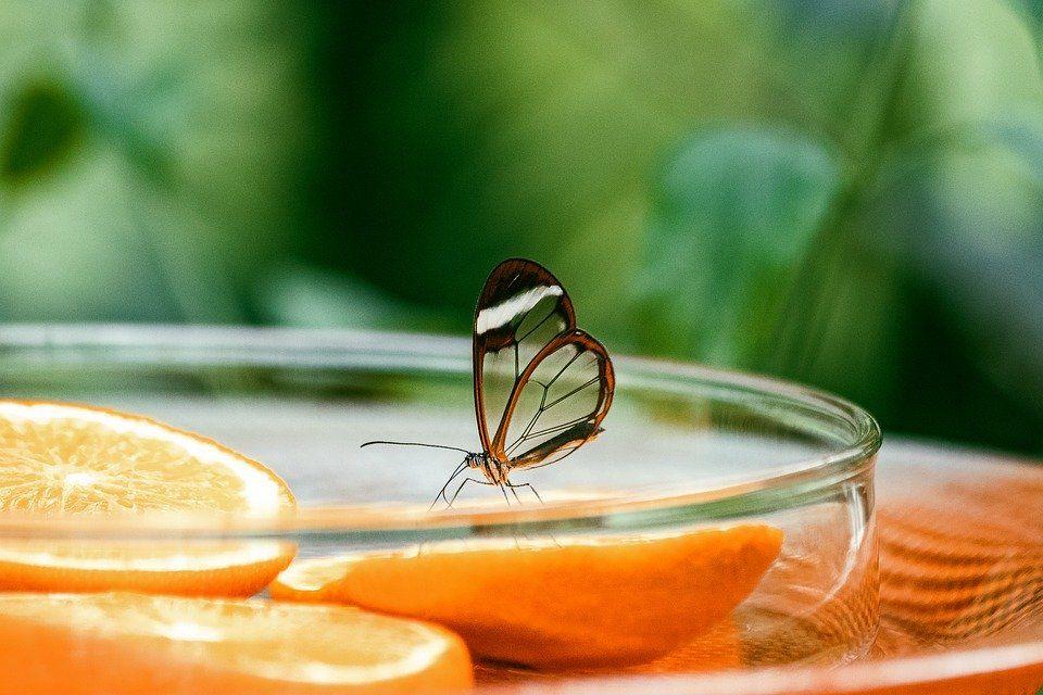Спеуиалисты представили около 15 видов крылатых насекомых. Фото: Pixabay