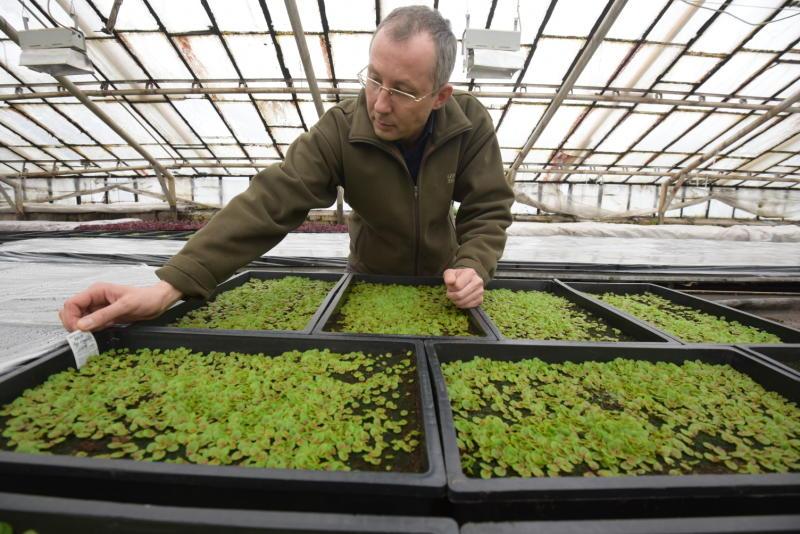 Газон с плодородной землей засеют в Щаповском