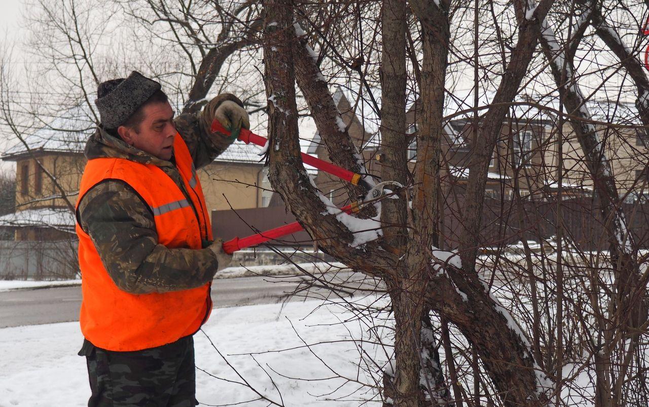 Санитарную обработку растений завершили в Рязановском