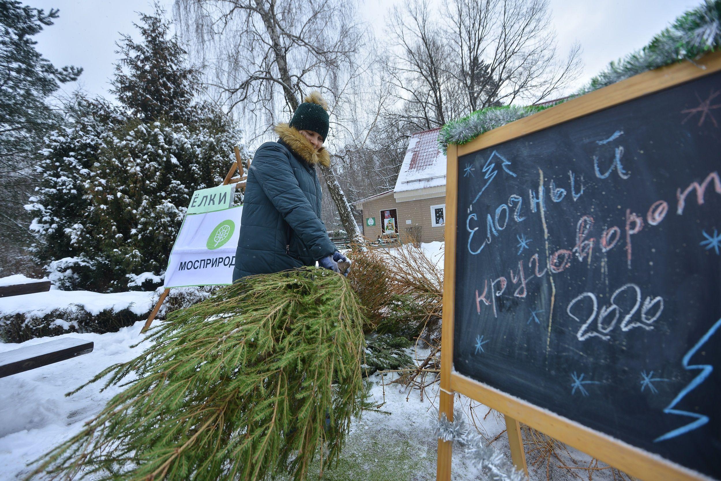 Москвичи сдали свыше 50 тысяч деревьев на переработку в 2020 году