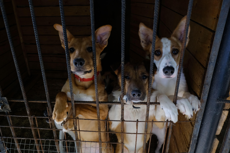 Горожане забрали около трех тысяч животных из приютов Москвы.Фото: архив, «Вечерняя Москва»