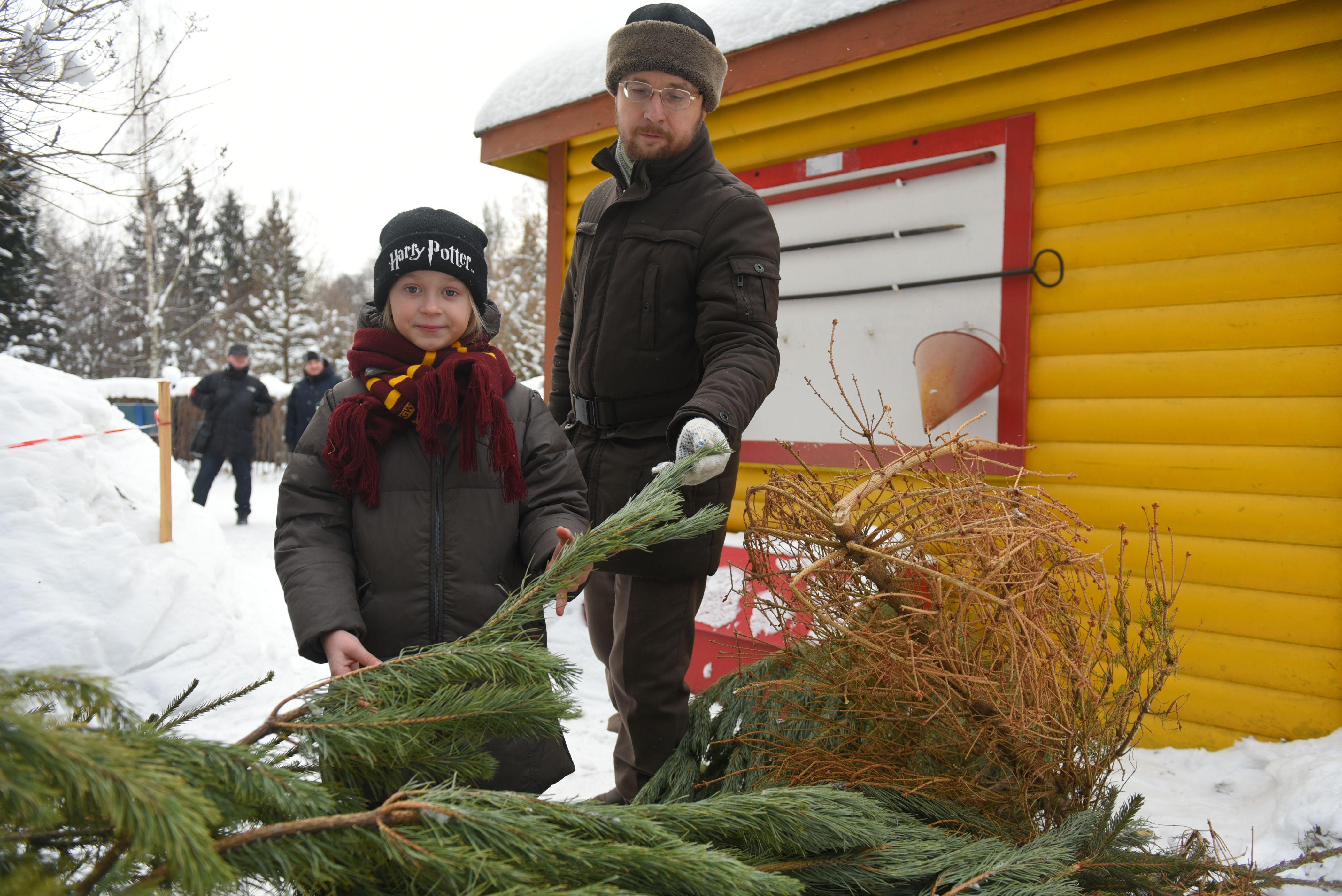 Москвичи установили рекорд по сдаче елей на переработку