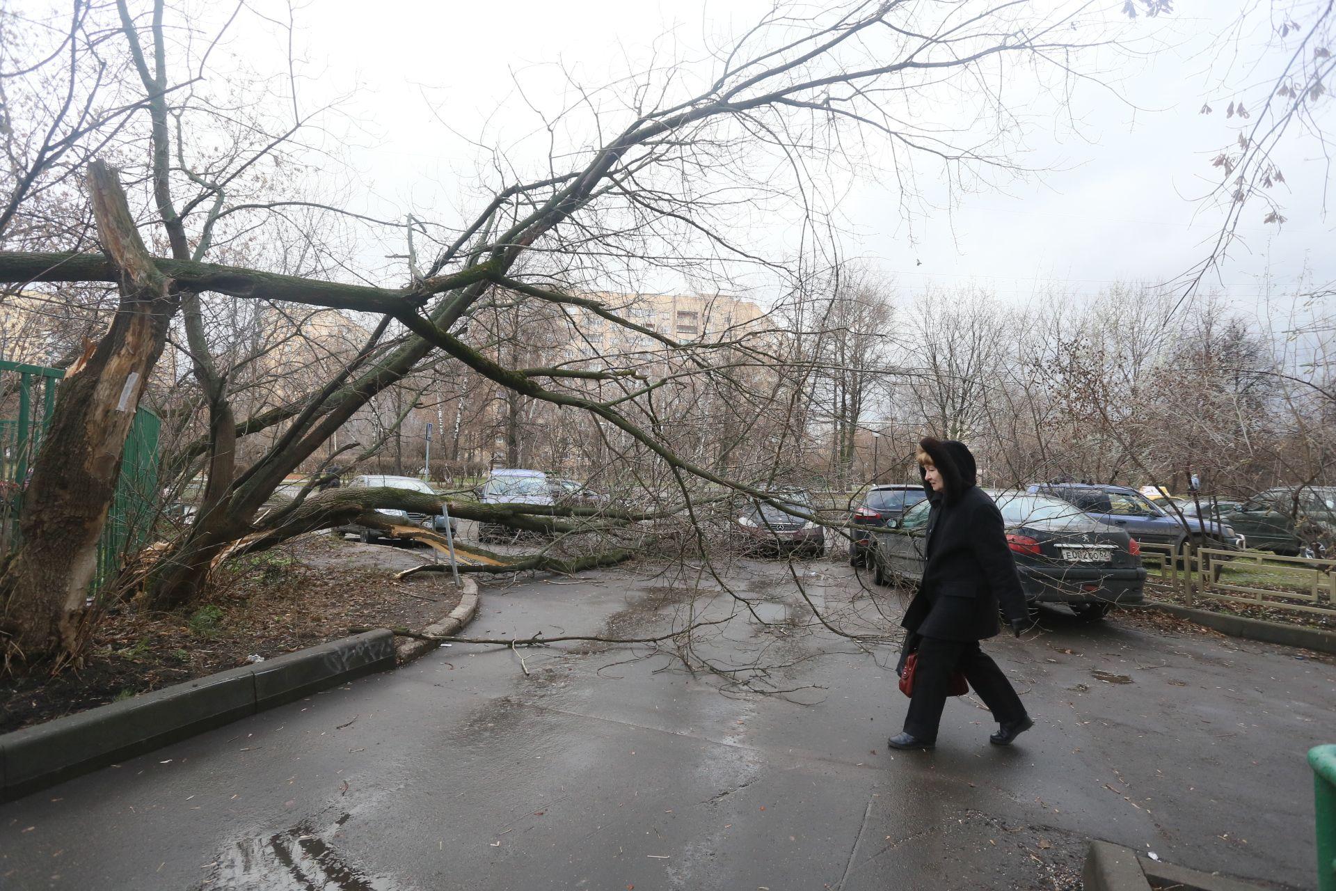 Москвичей убедили парковаться аккуратнее из-за ветра