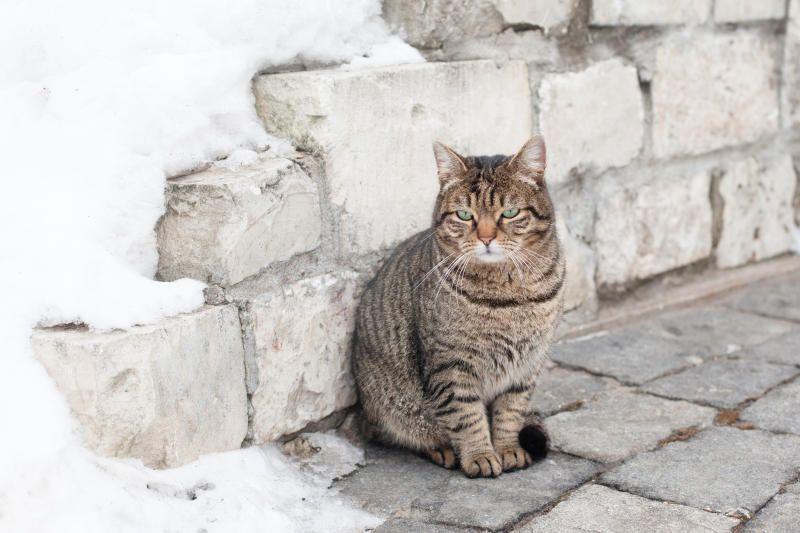 Москвичам расскажут о правильном уходе за домашними животными. Фото: Татьяна Родионова