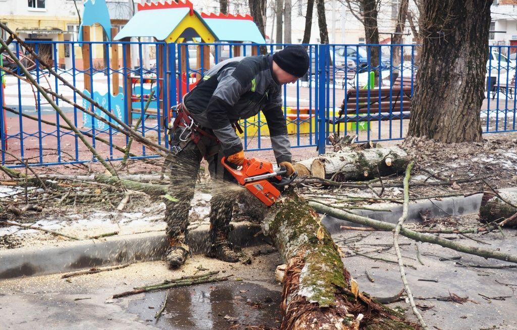 Сухостойное дерево рядом с парковкой в поселке Знамя Октября спилили