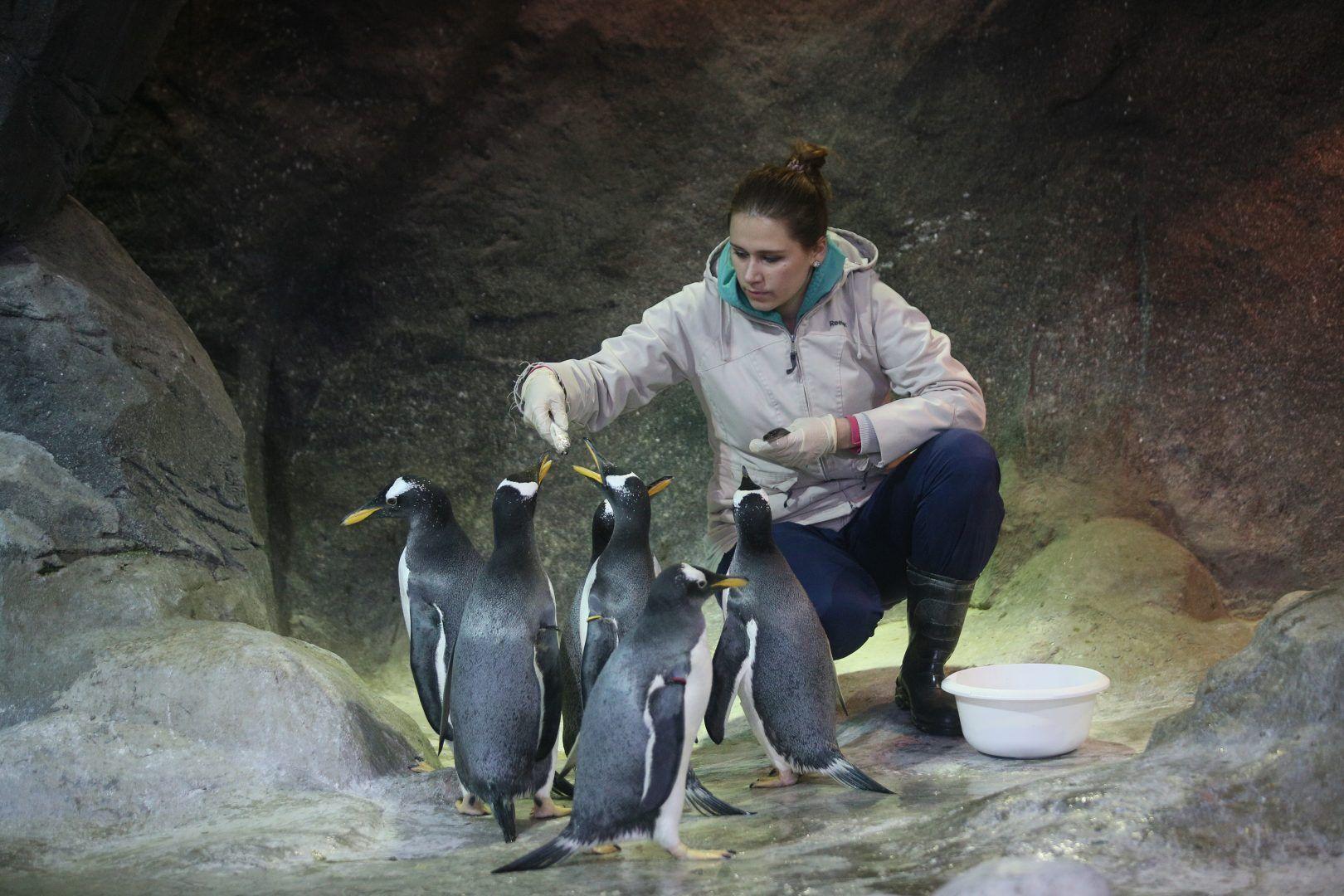 Московский зоопарк запустил онлайн-трансляции из вольеров.Фото: Антон Гердо