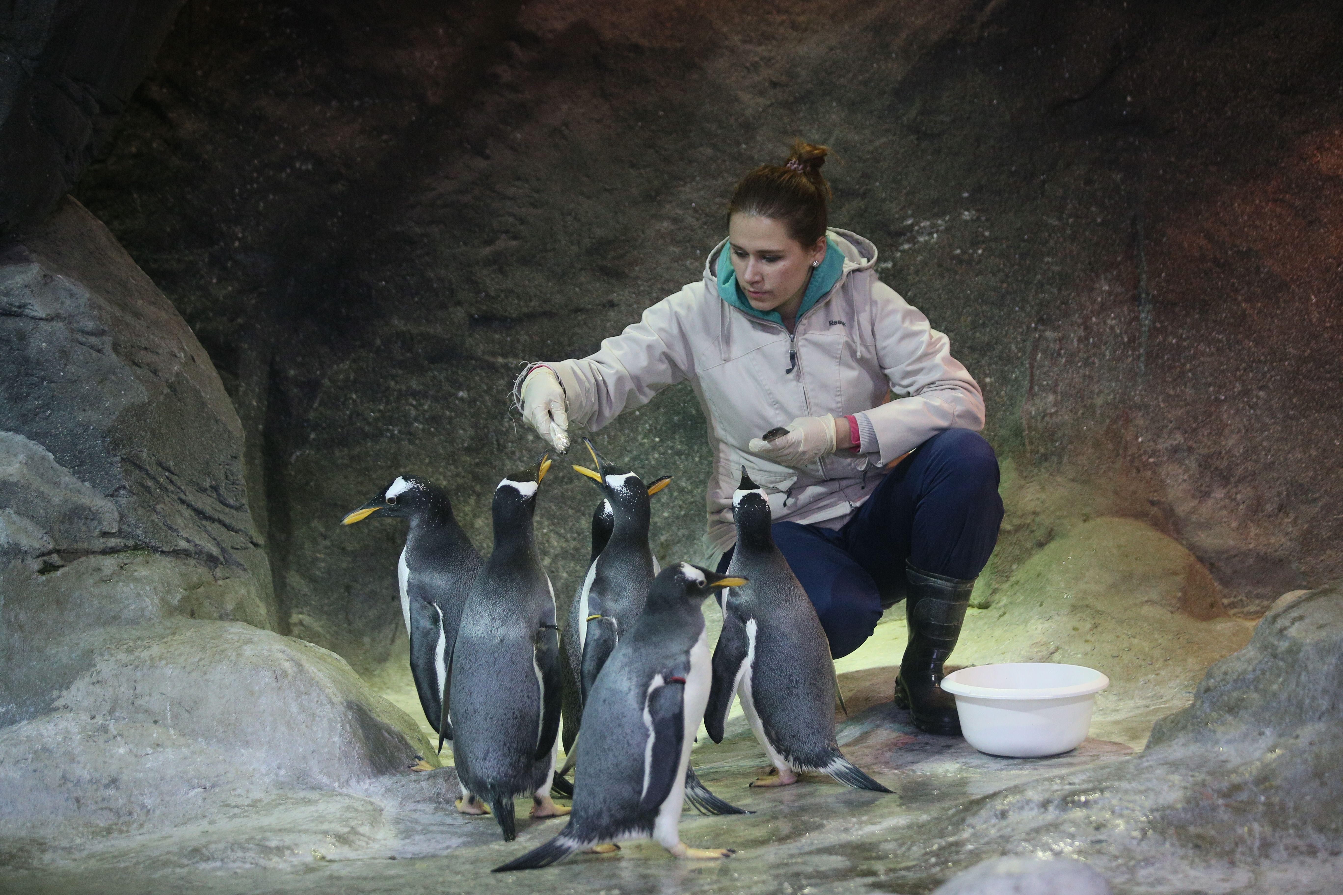 Московский зоопарк запустил онлайн-трансляции из вольеров