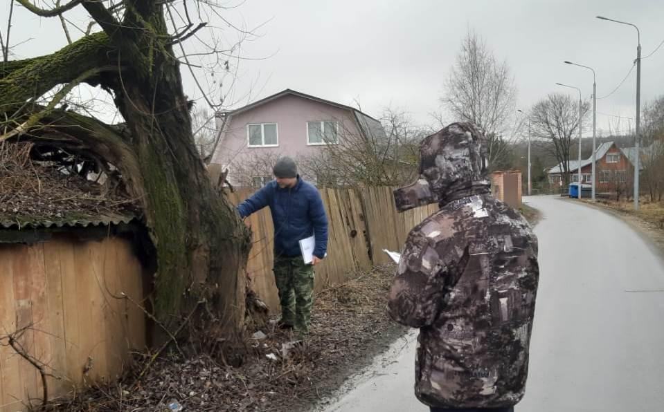 Дендрологи начали обследования деревьев в Краснопахорском