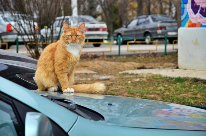 Парковочную разметку обновят к весне в Новофедоровском