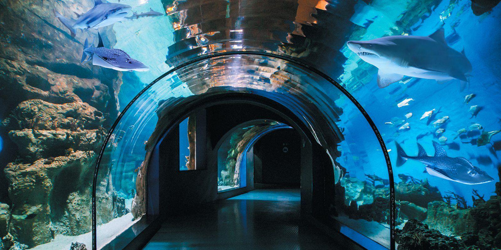 Московский океанариум на ВДНХ подготовил познавательные видеоматериалы