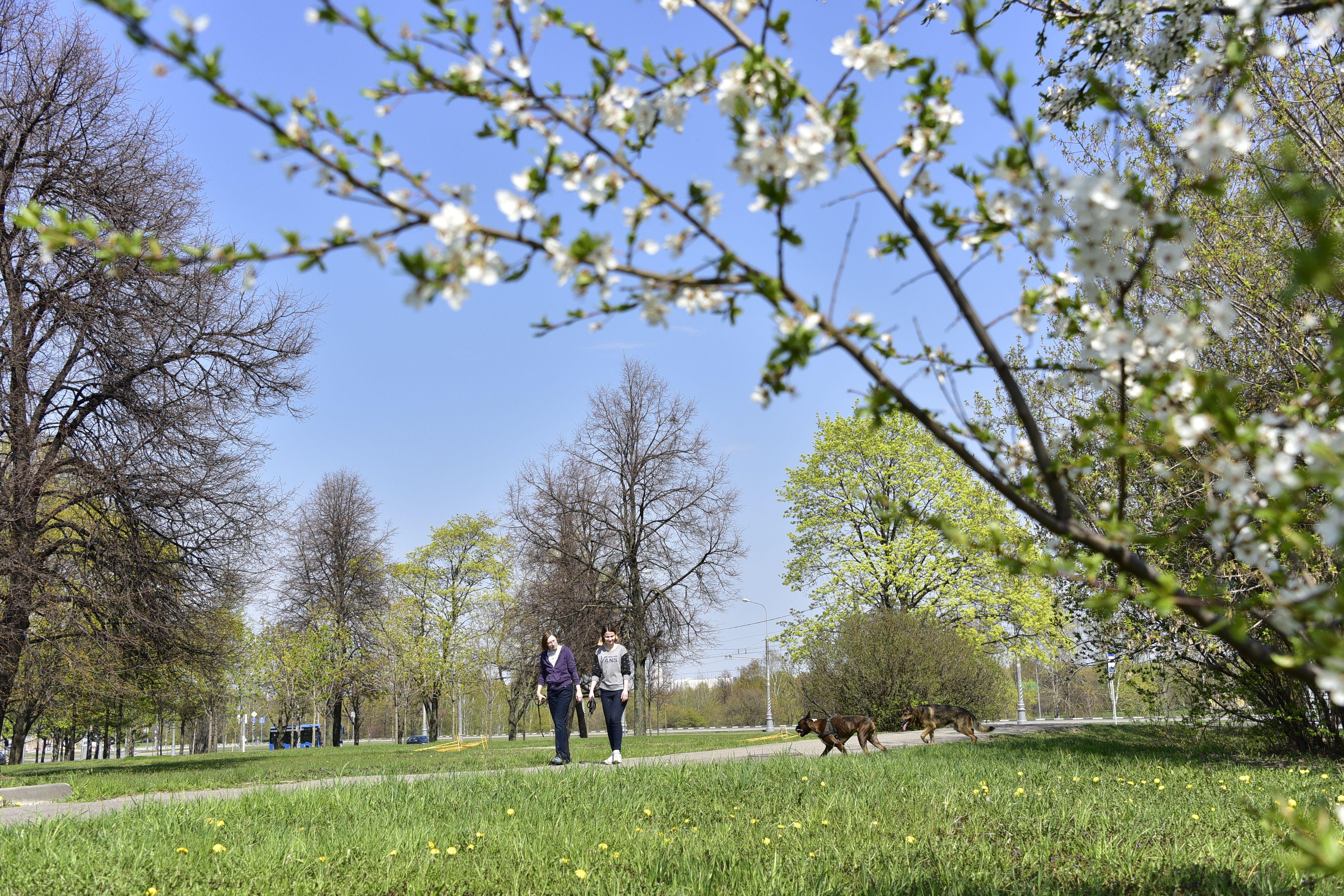 Вторая половина мая в Москве будет прохладной