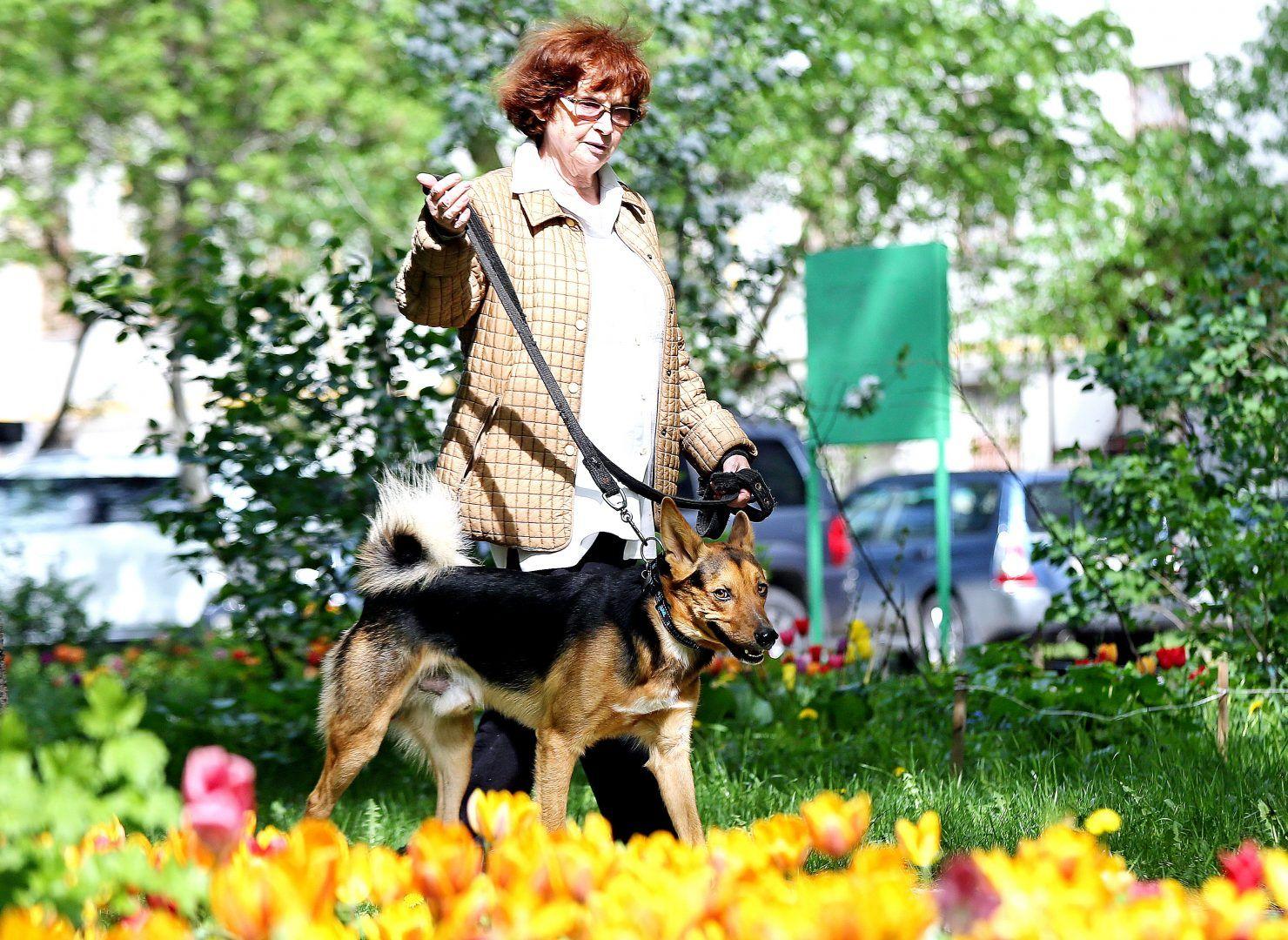 На территории поселения запретили проведение выставок собак и кошек. Фото: Алексей Орлов, «Вечерняя Москва»