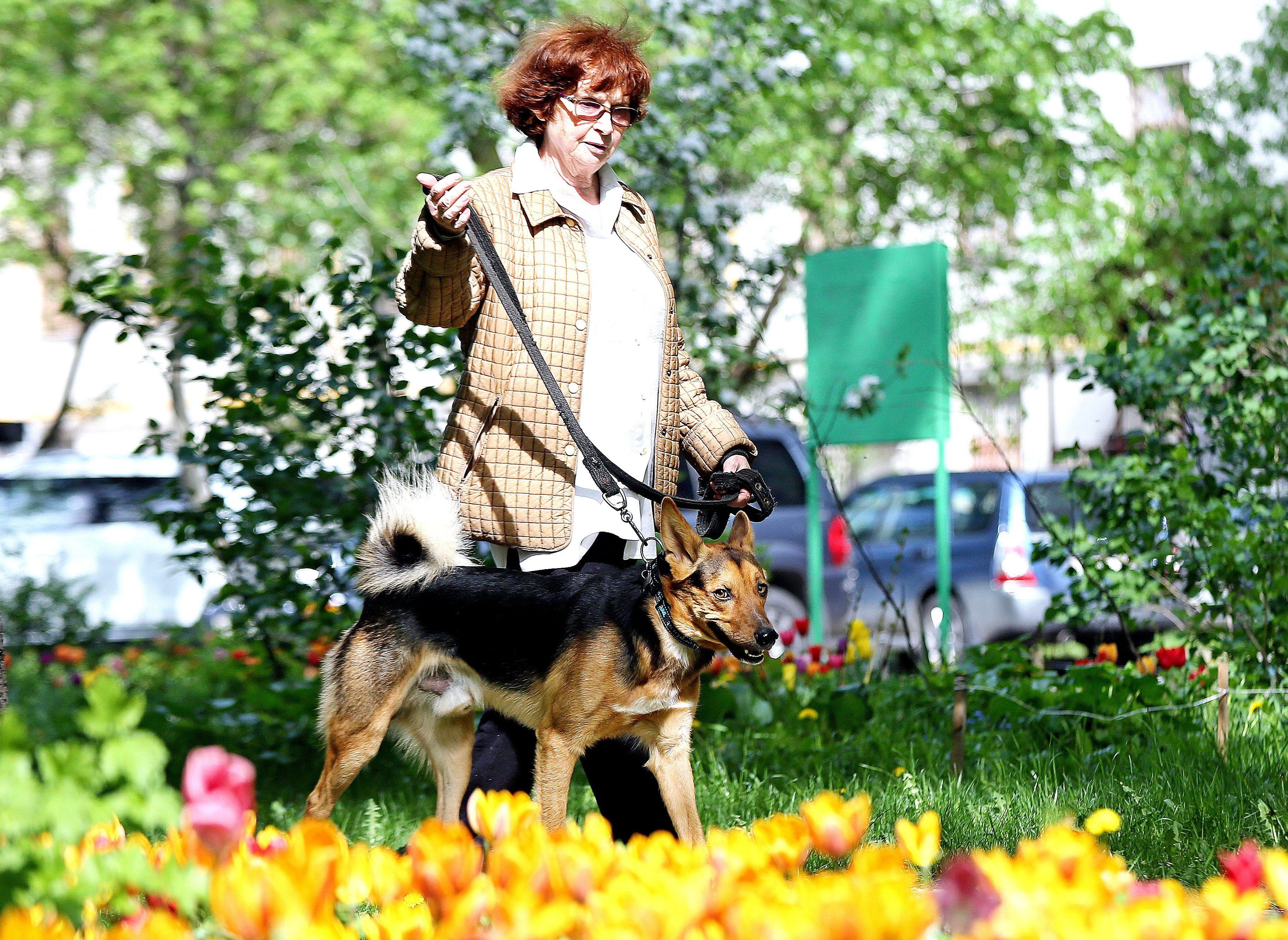 Карантин в Кленовском: в поселении ввели ряд ограничений из-за бешенства животных