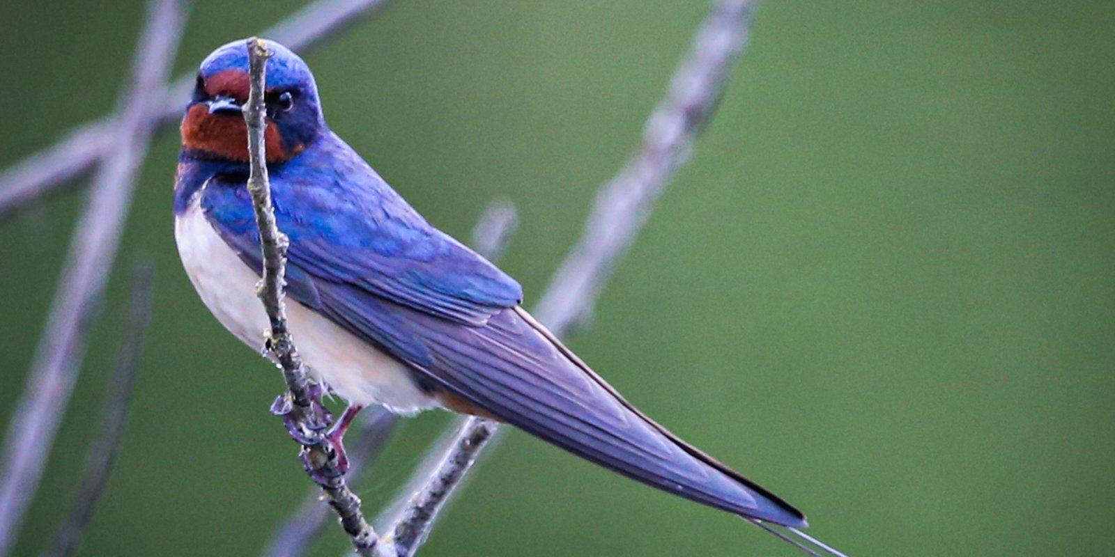 Ласточки и другие виды птиц вернулись в столицу после зимовки