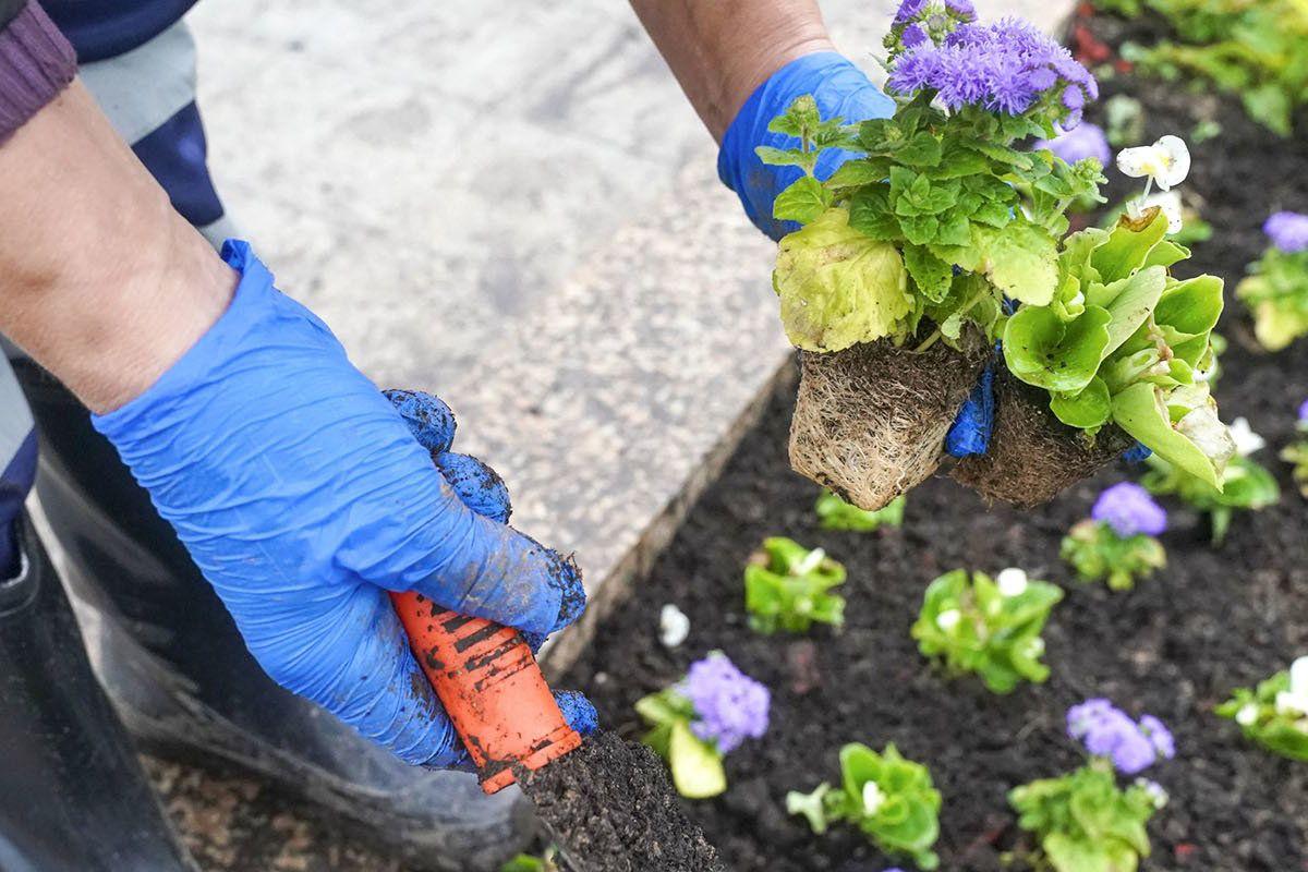 Улицы поселения Кокошкино украсят яркими цветами