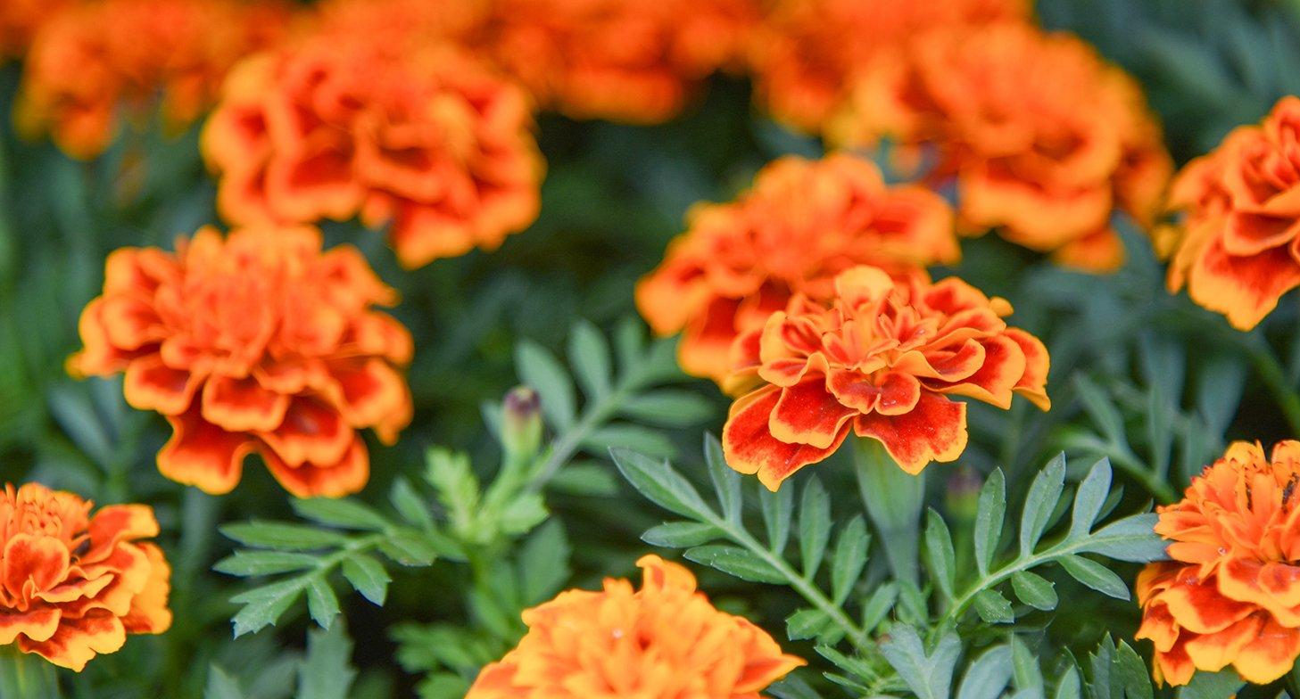 Красивые цветы поднимут настроение жителям. Фото: сайт мэра Москвы
