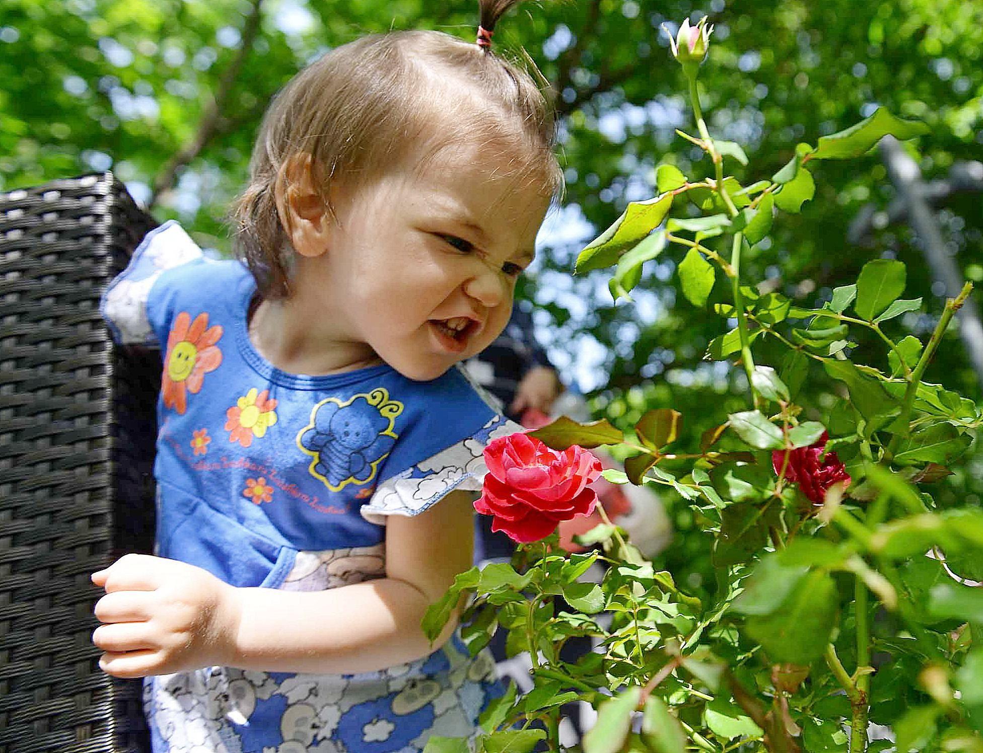 Сезон цветения роз начался на ВДНХ