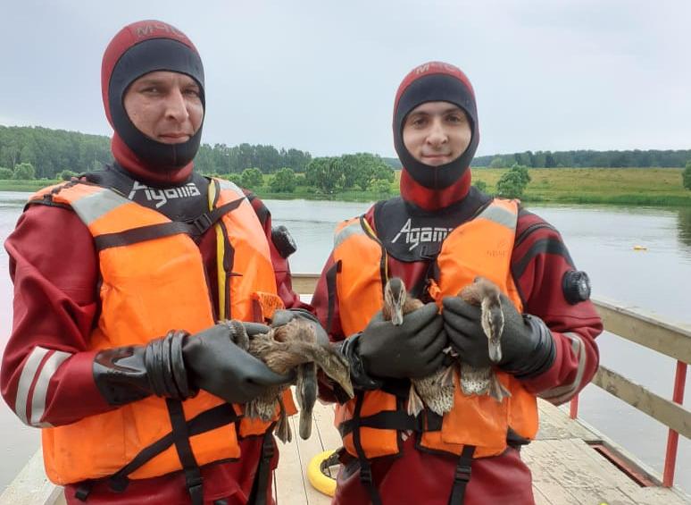 Утят спасли из коллектора в Кленовском