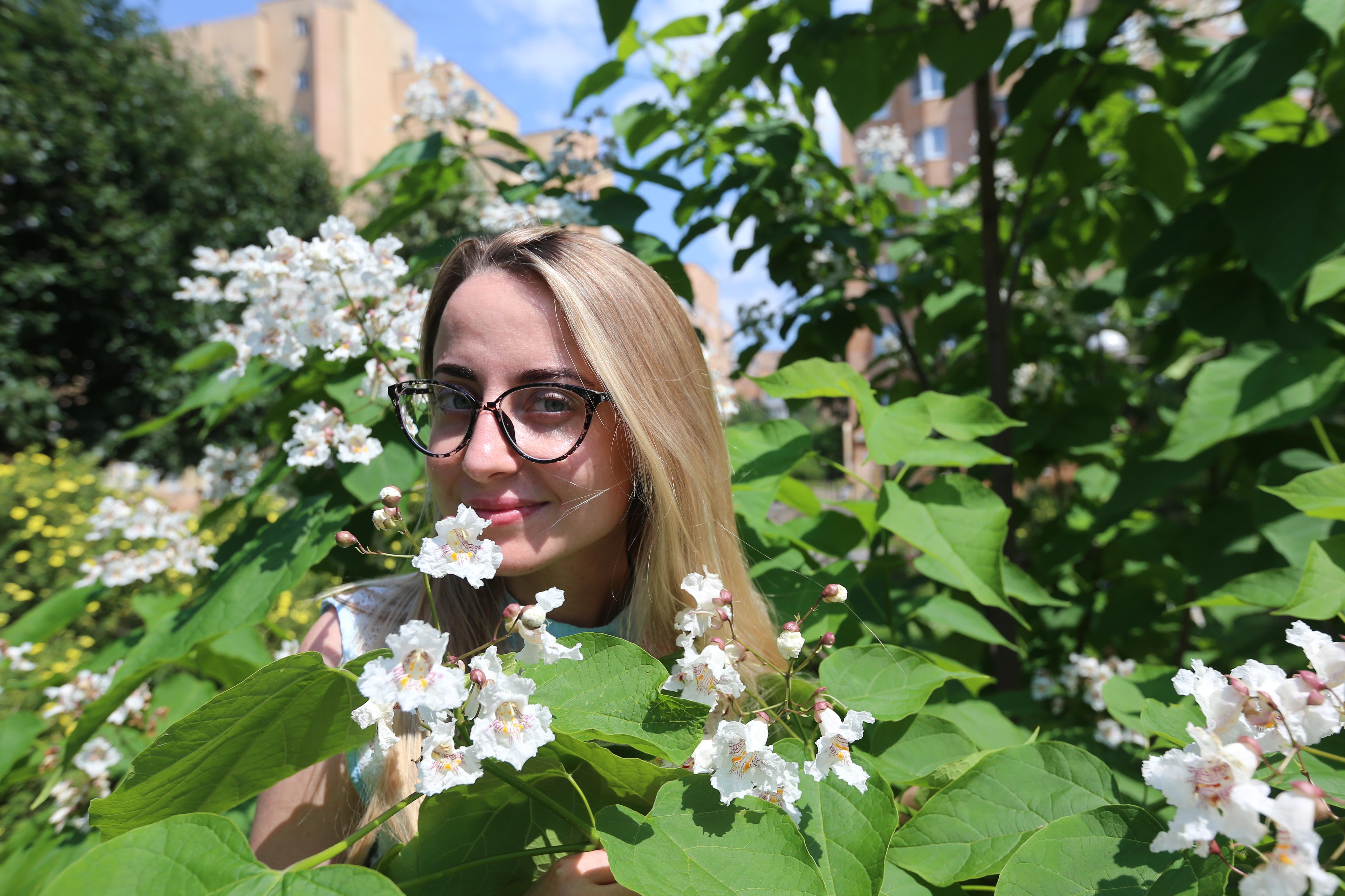 Стоп-кадр: В Воскресенском цветет катальпа