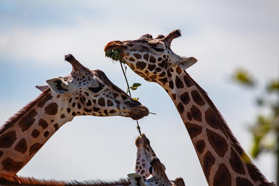 Экскурсию в Московский зоопарк организуют для воспитанников из Внуковского