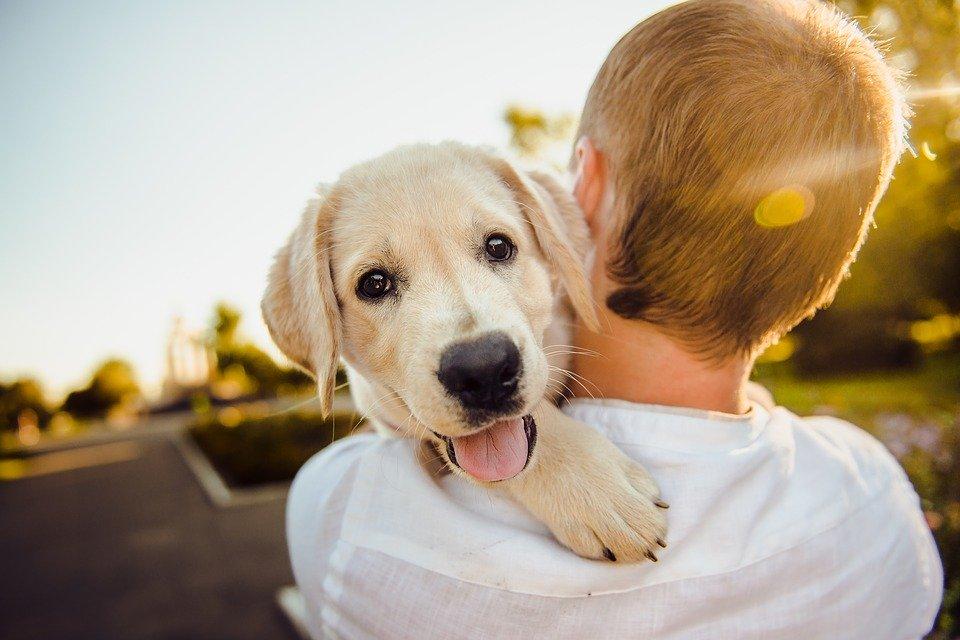 Горки-лестницы, барьеры и лабиринты: площадку для выгула собак в Рязановском оснастят тренажерами