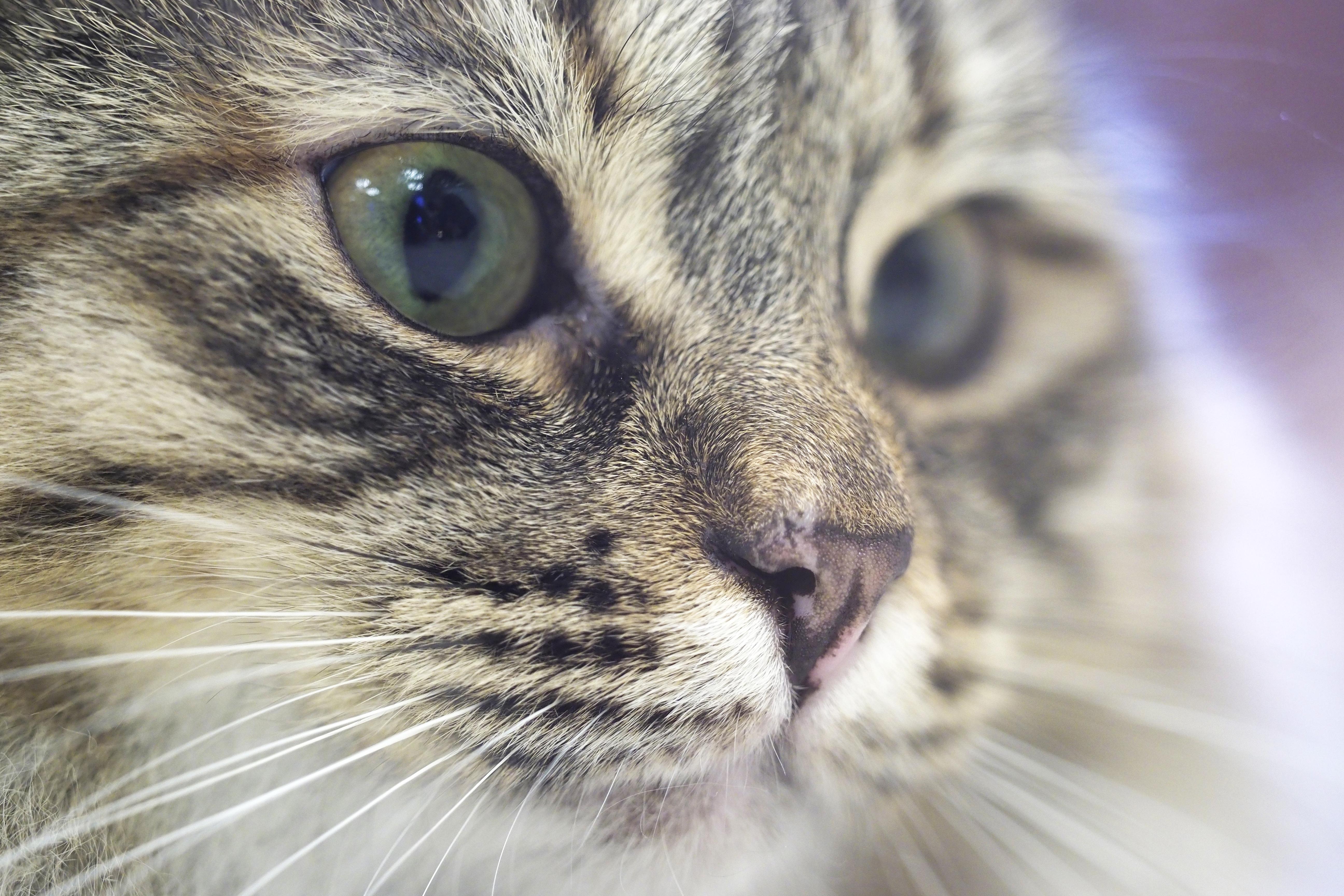 Московские ветеринары приняли почти 50 тысяч кошек за год