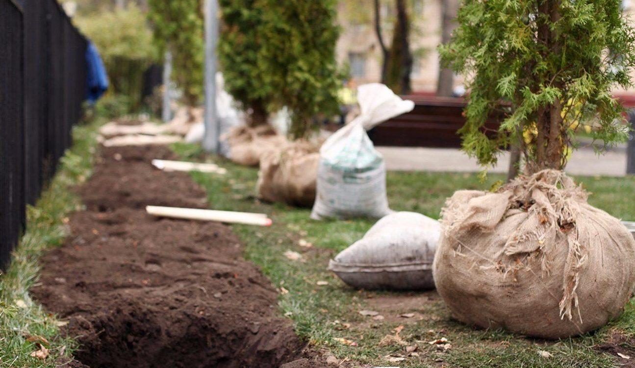 Порядка 100 декоративных кустарников и 50 деревьев высадят в Роговском