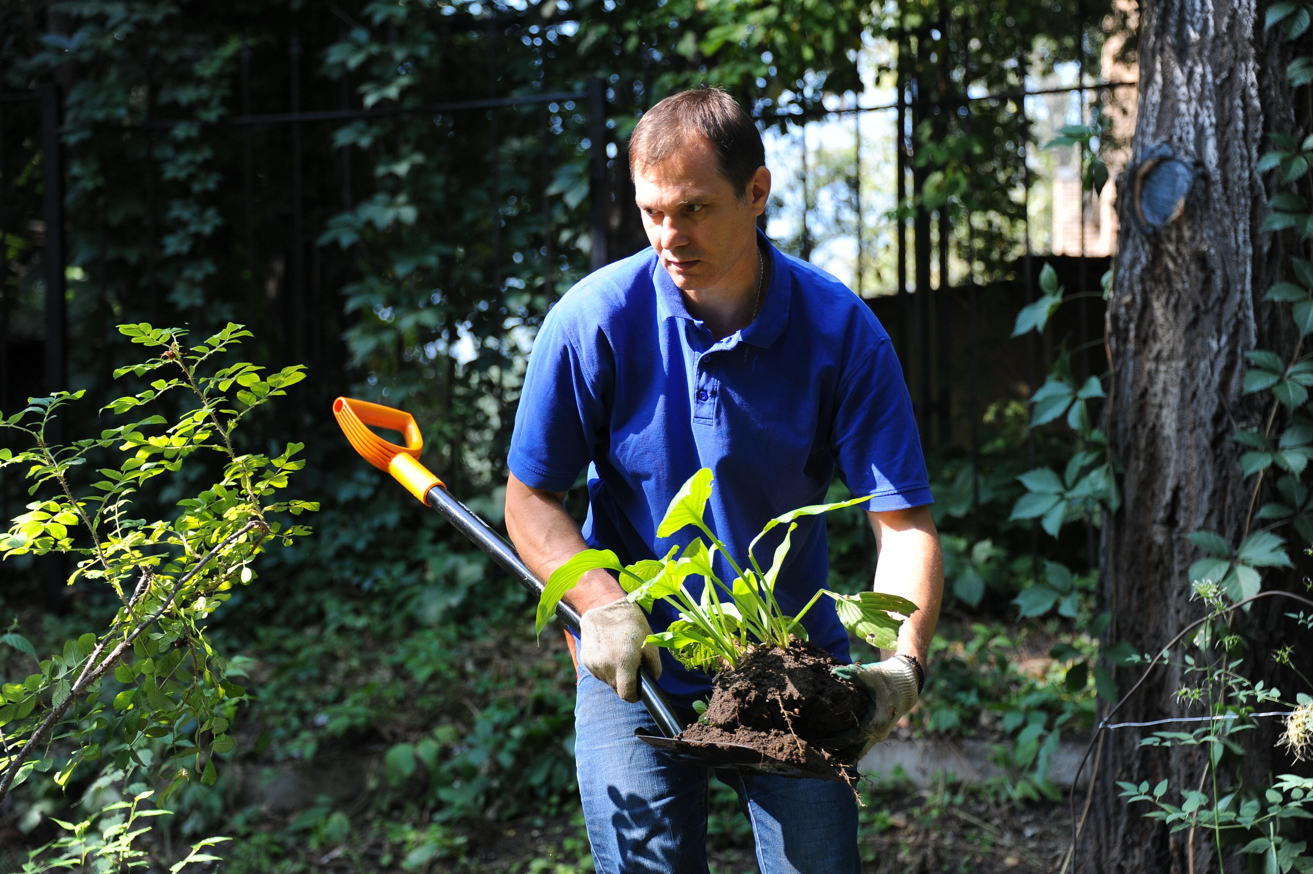 Озеленение и благоустройство общественного пространства проведут в Московском
