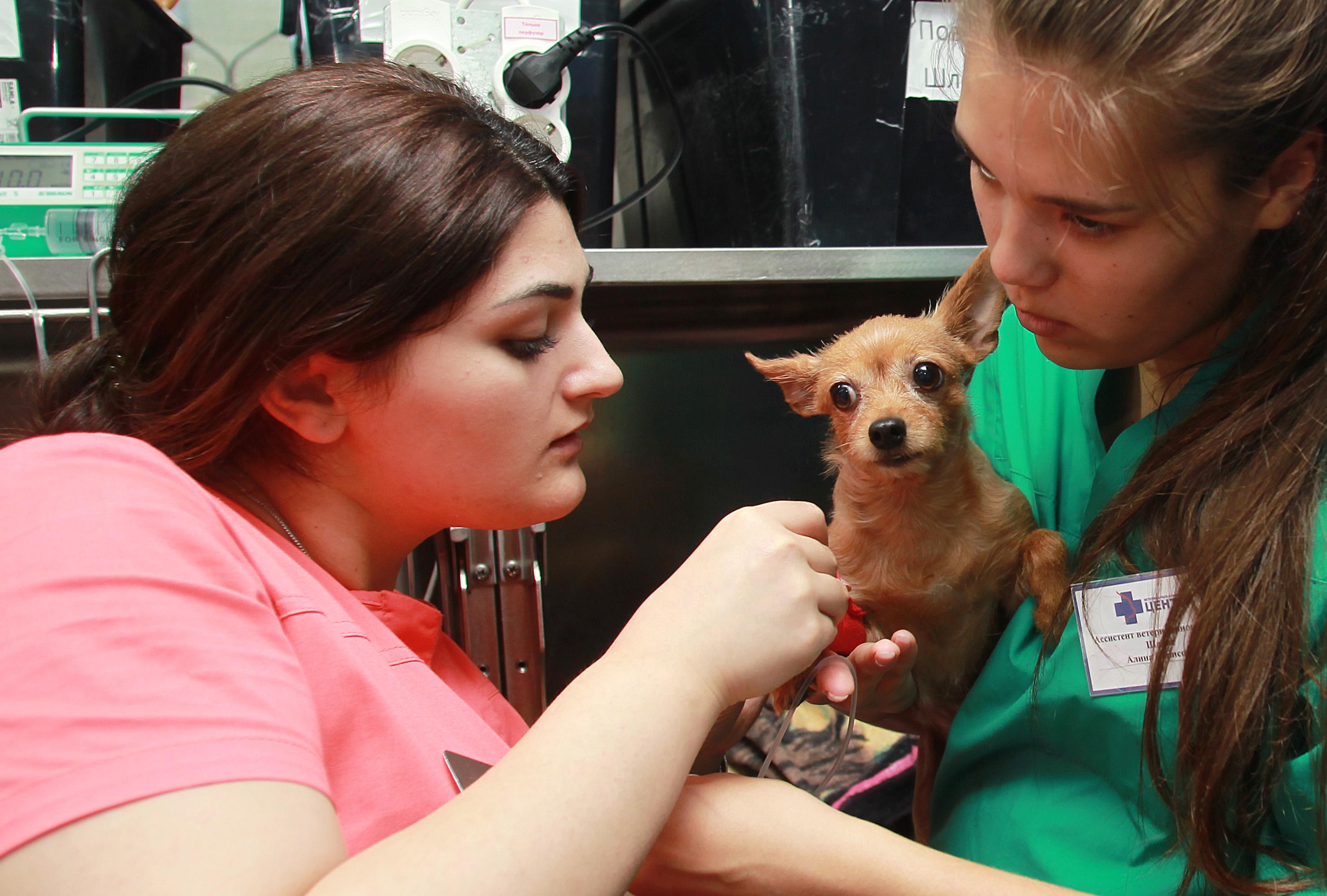 Московские ветеринары начали чипировать животных со скидкой