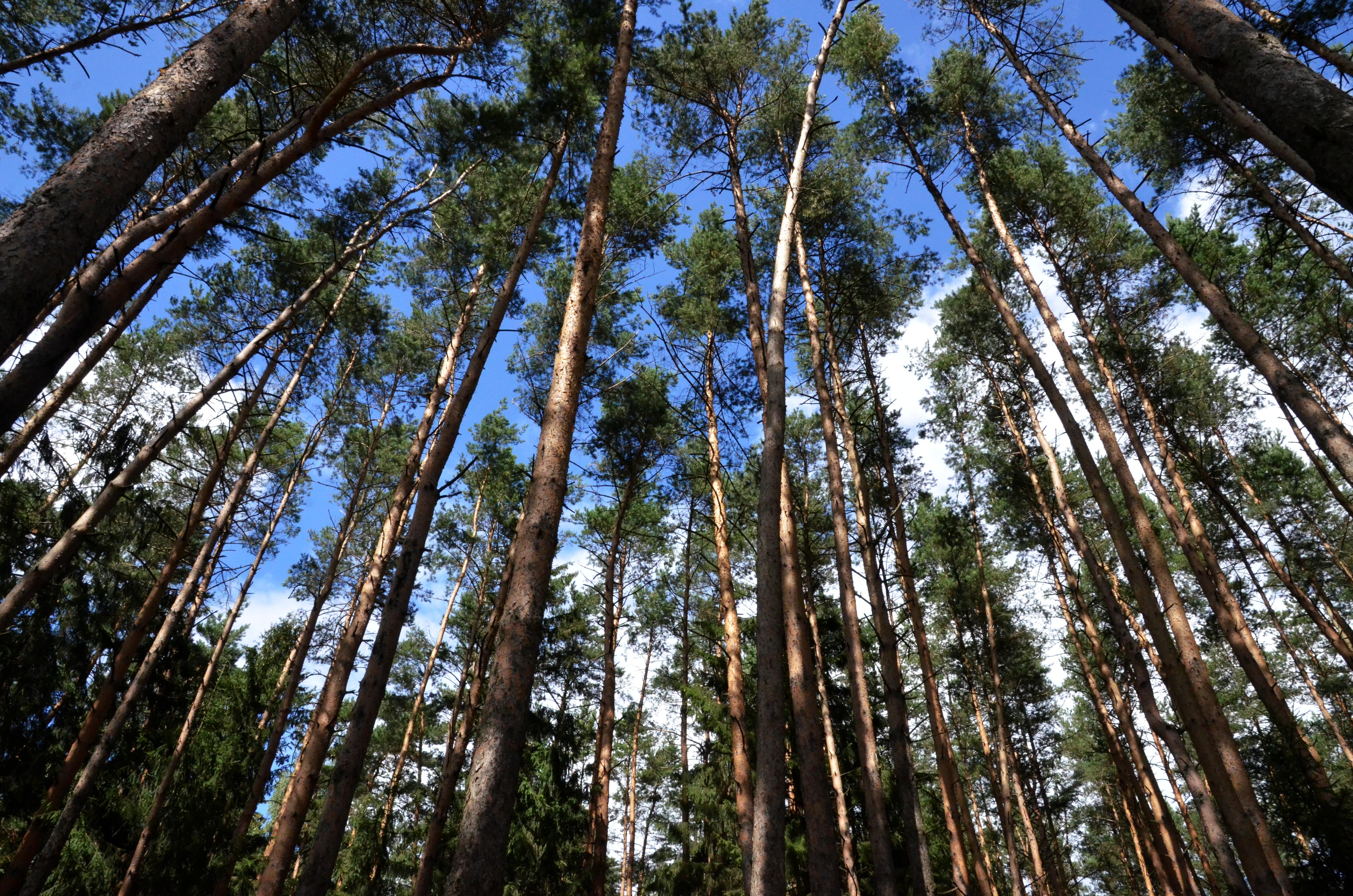 Процесс благоустройства парка «Говоровский лес» осмотрел мэр Москвы