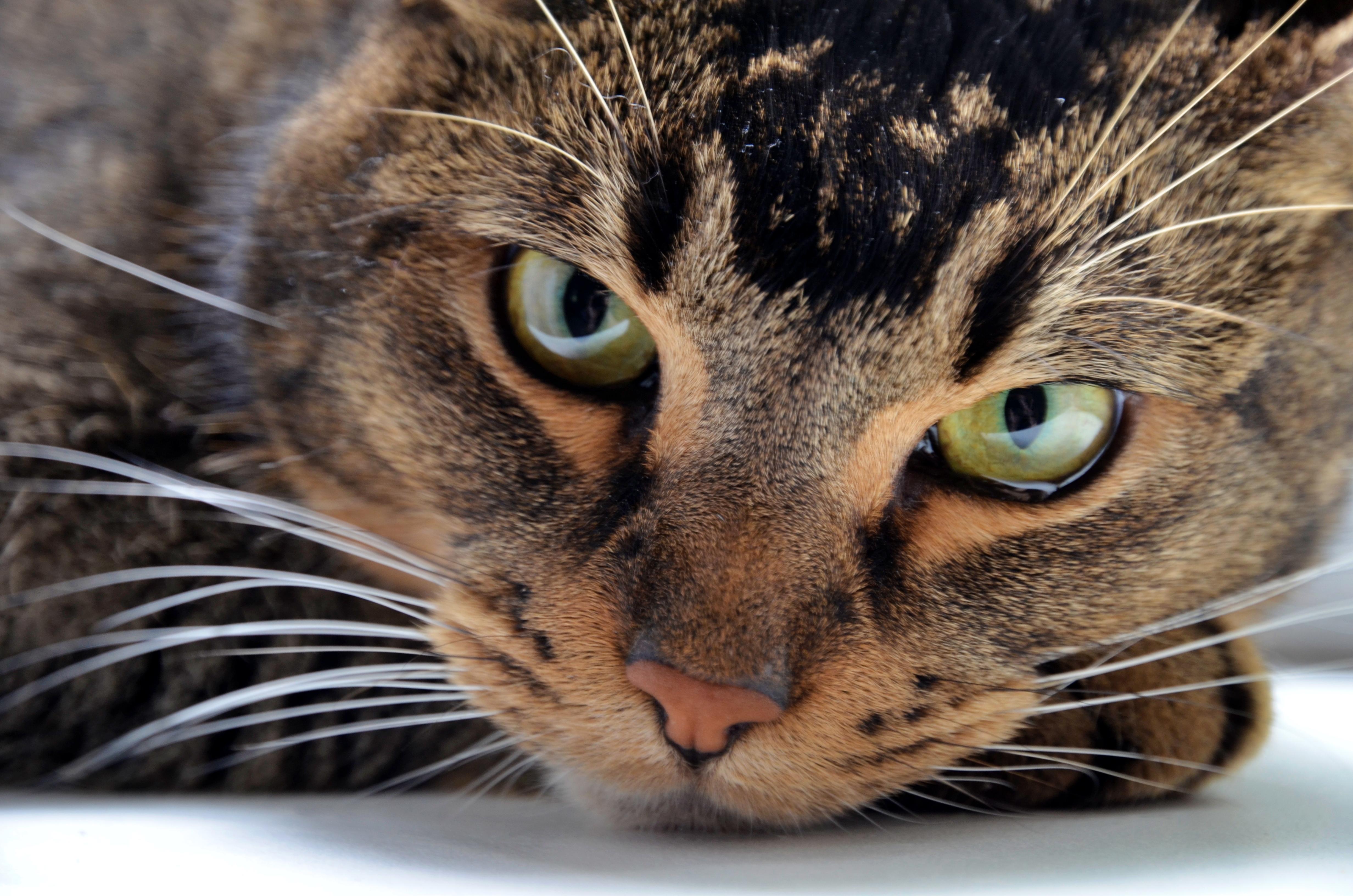Усатый-полосатый: онлайн-викторину ко Всемирному дню защиты животных проведут в Рязановском