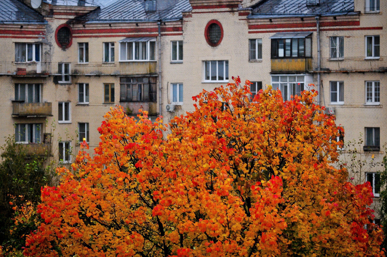 Новая волна потепления придет в Москву 22 октября