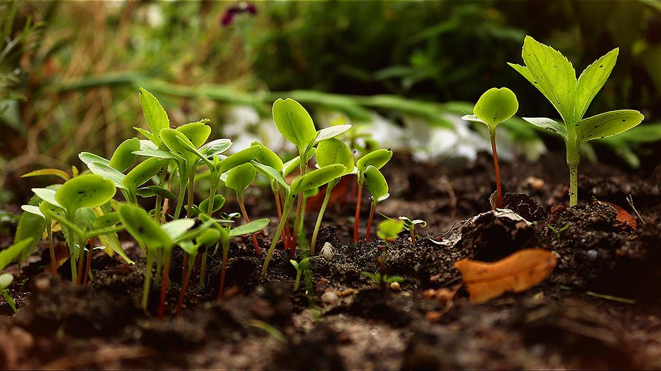 Молодые растения высадят в Десеновском