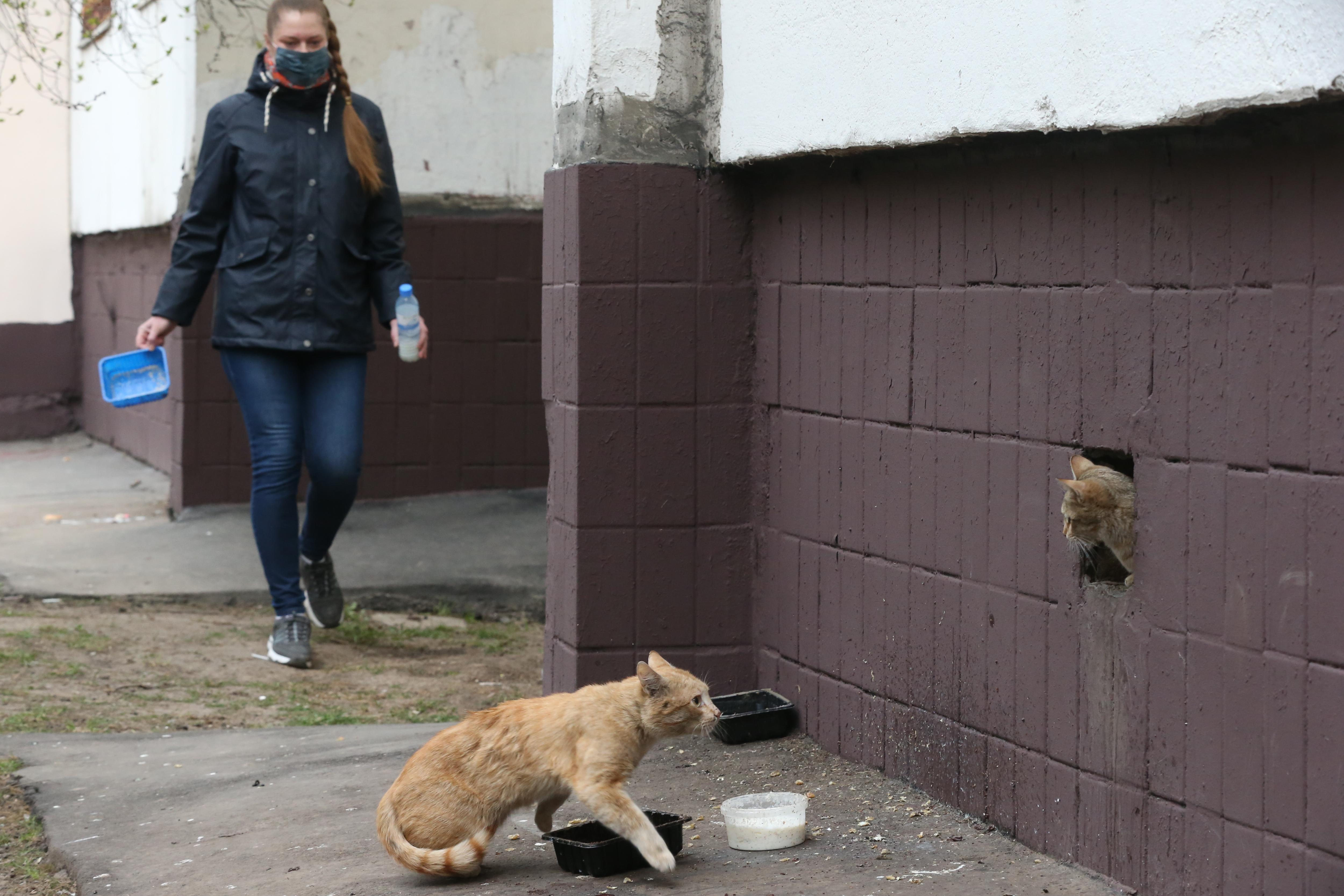 Власти встали на защиту животных