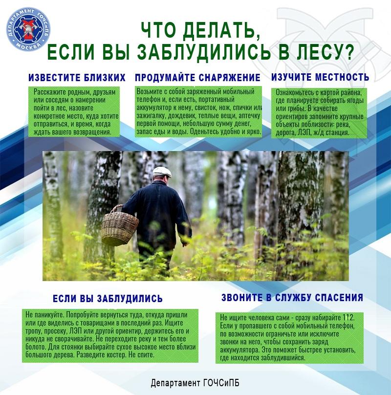 Безопасность на природе: Как не потеряться в лесу