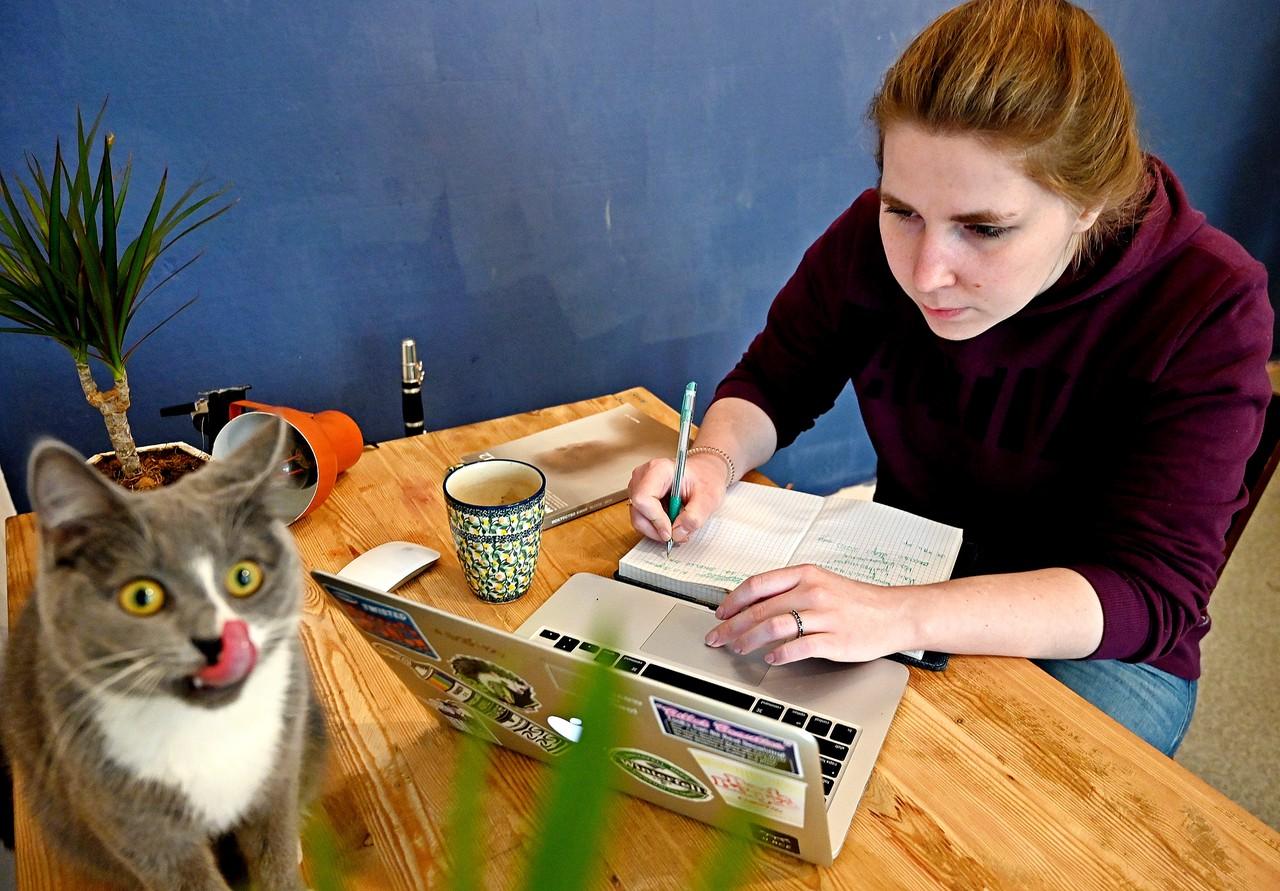 Новый сервис поможет москвичам найти пропавших котов и собак