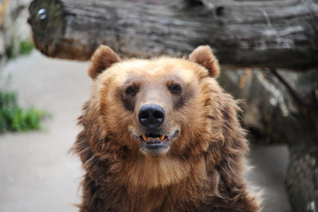 Медведи проснутся весной. Фото: Светлана Колоскова