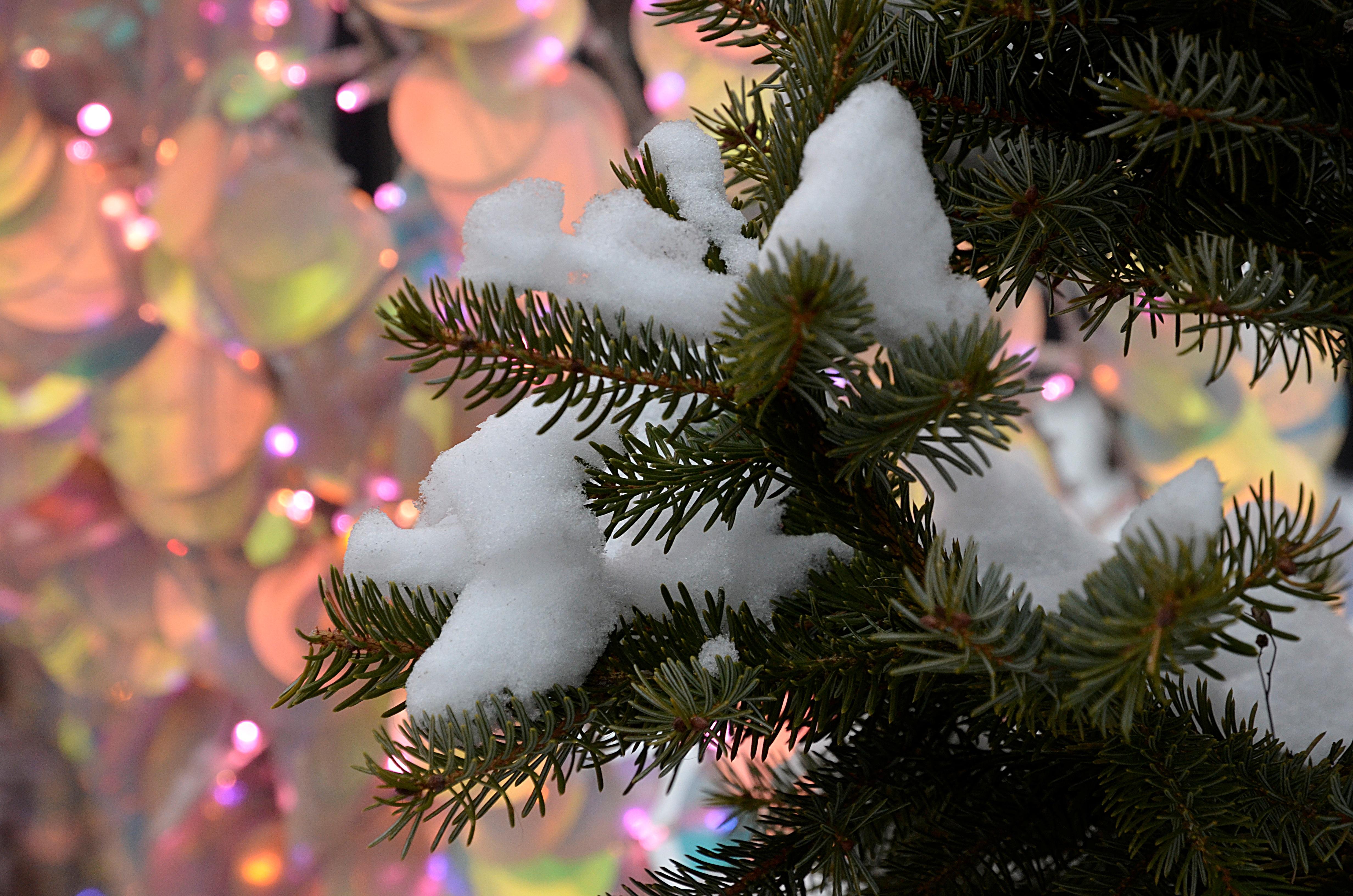 Синоптики рассказали о погоде в столичном регионе 26 декабря. Фото: Анна Быкова