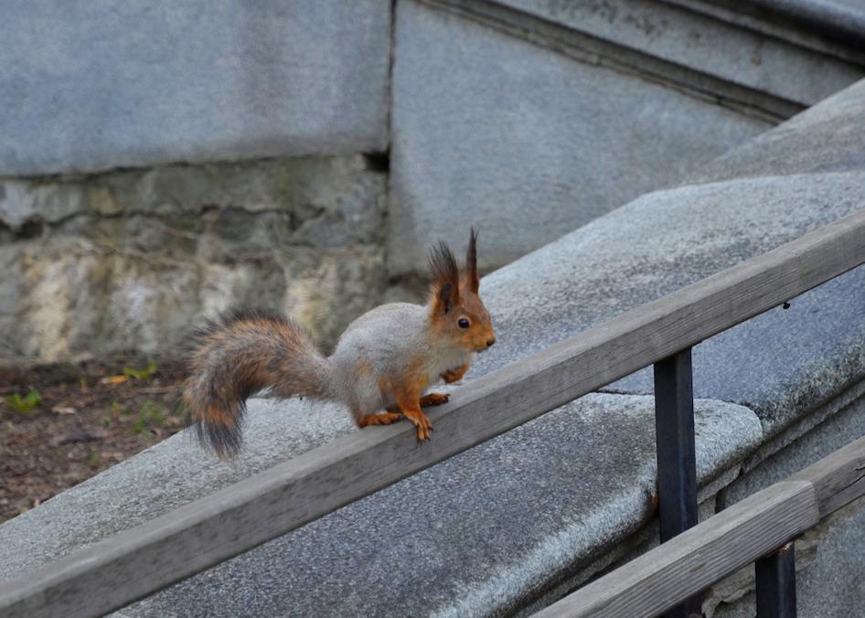 Жителям города рассказали о правилах кормления животных в парках столицы