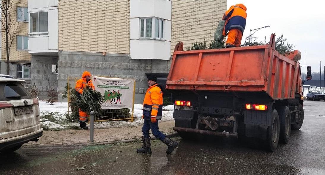 Более 140 елок сдали жители Московского на переработку