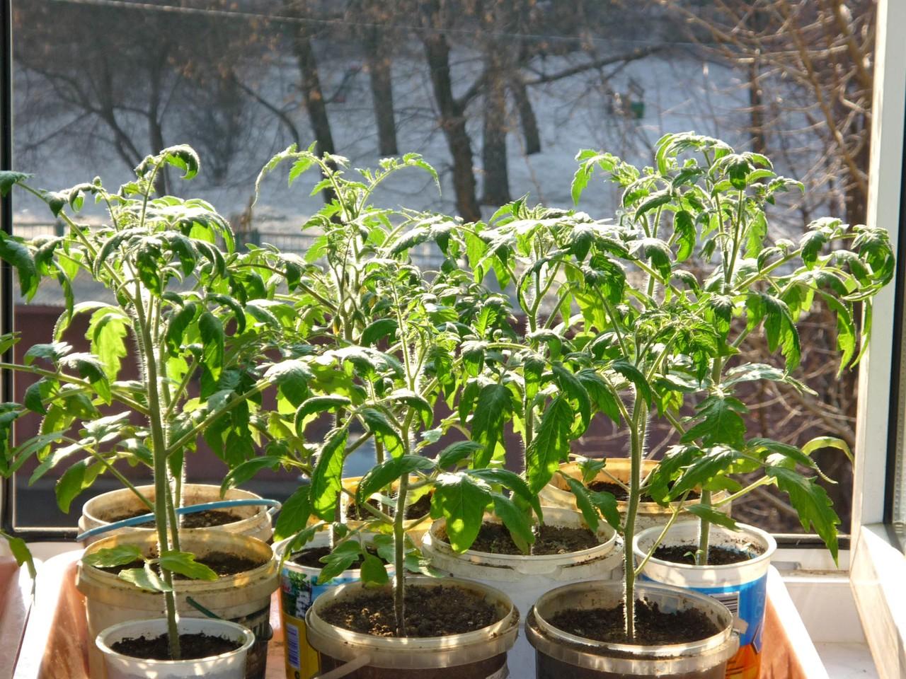 Горожане получат участки под строительство садовых домов в Новой Москве