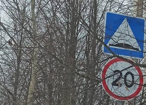 Проверку на предмет видимости дорожных знаков проведут в Роговском. Фото: предоставили сотрудники администрации.