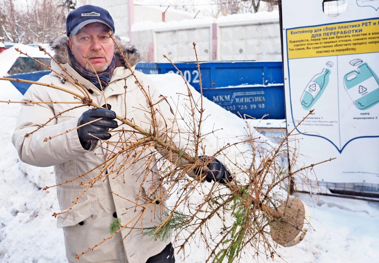 Жители Москвы сдали на переработку свыше 44,5 тысячи новогодних елей