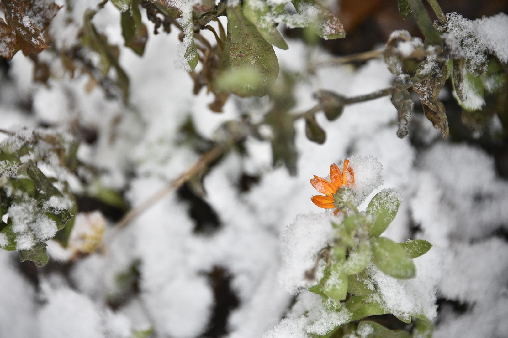 Снег в Москве не растает до апреля