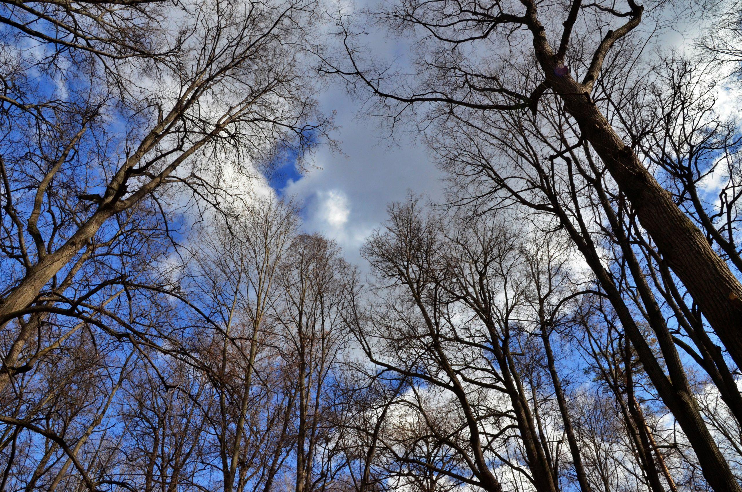 Метеорологи рассказали о погоде в Москве 18 апреля