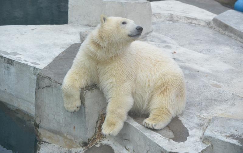 Посетители Московского зоопарка выберут имя для белого медвежонка