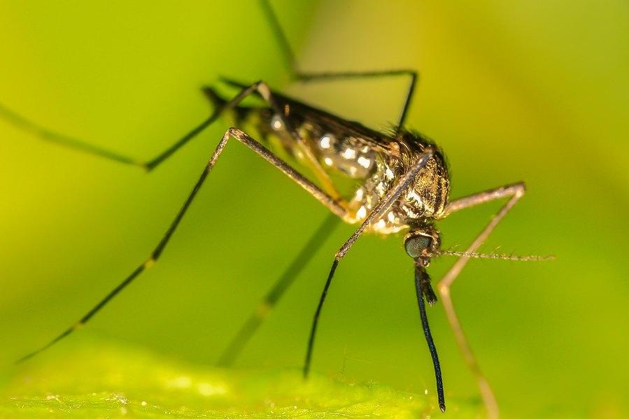 Москвичам рассказали о количестве комаров этим летом