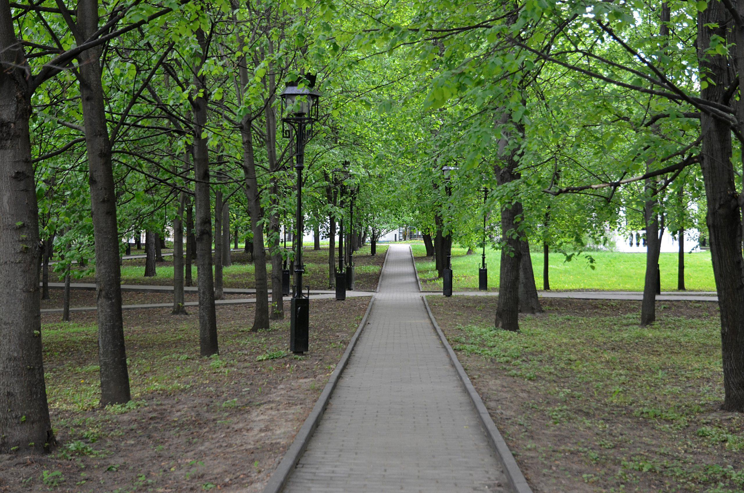 Более 200 гектаров парковых пространств появится в Новой Москве
