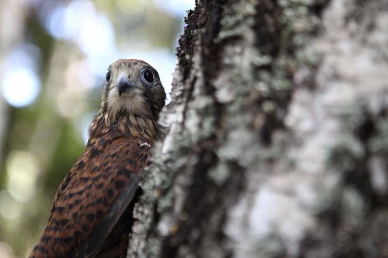 Выпуск диких птиц на волю пройдет в Вороновском