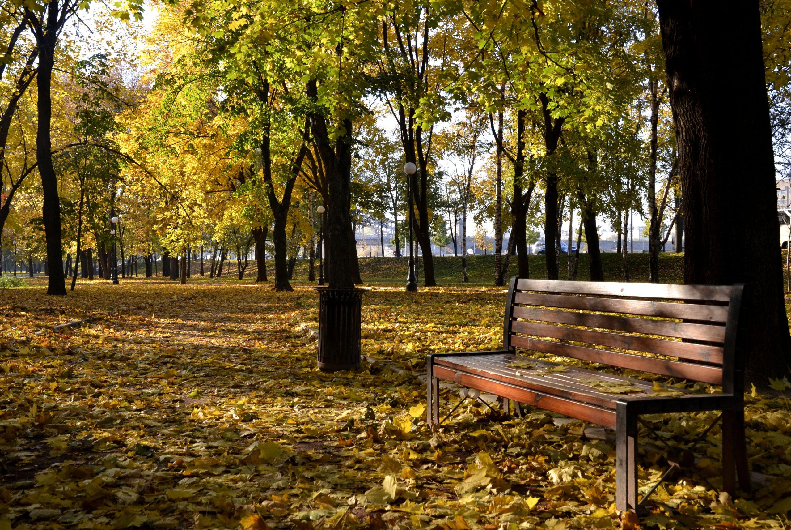 Обрезку деревьев начали проводить в парке села Кленово поселения Кленовское